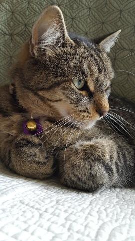 Hemingway the CAt